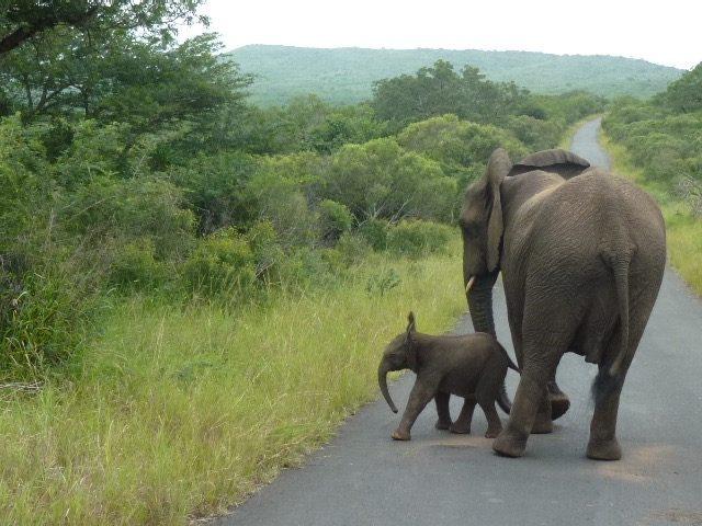 Elephant Baby care